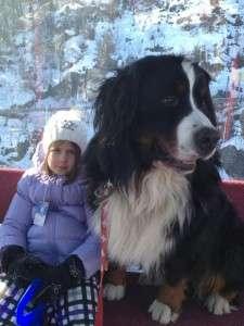 understanding canine communication