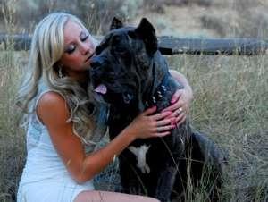 Canine Symptoms