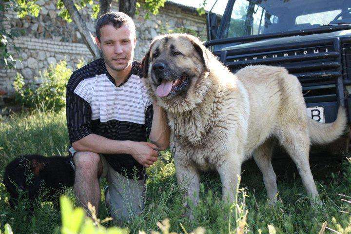 Illyrian Shepherd Dog
