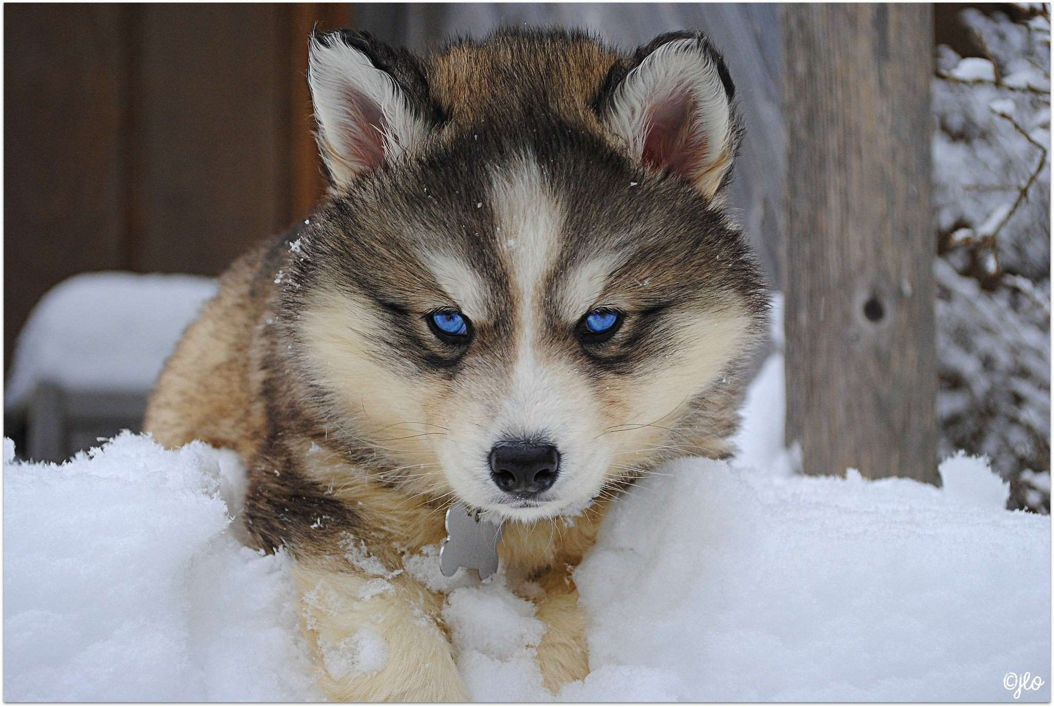 Husky Owners Experiences Wiring Diagram Master Blogs