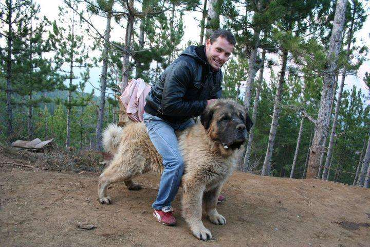 Yugoslav Shepherd Dog