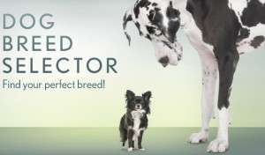 Dog Breed Selector