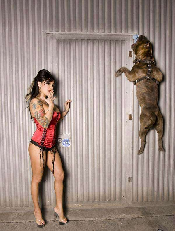 Pit Bull Breeds and Girls, Hot Girls with Pit Bull Dogs