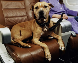 Dog plane travel