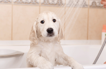 best dog shampoo for dogs with allergies