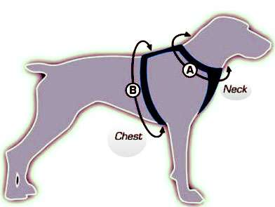 best miniature dog harness
