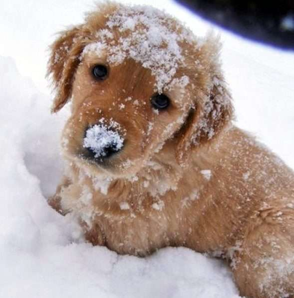 winter care for dogs