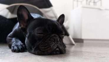 dog sleeping too much
