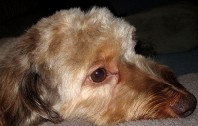 treat hot spots on dogs